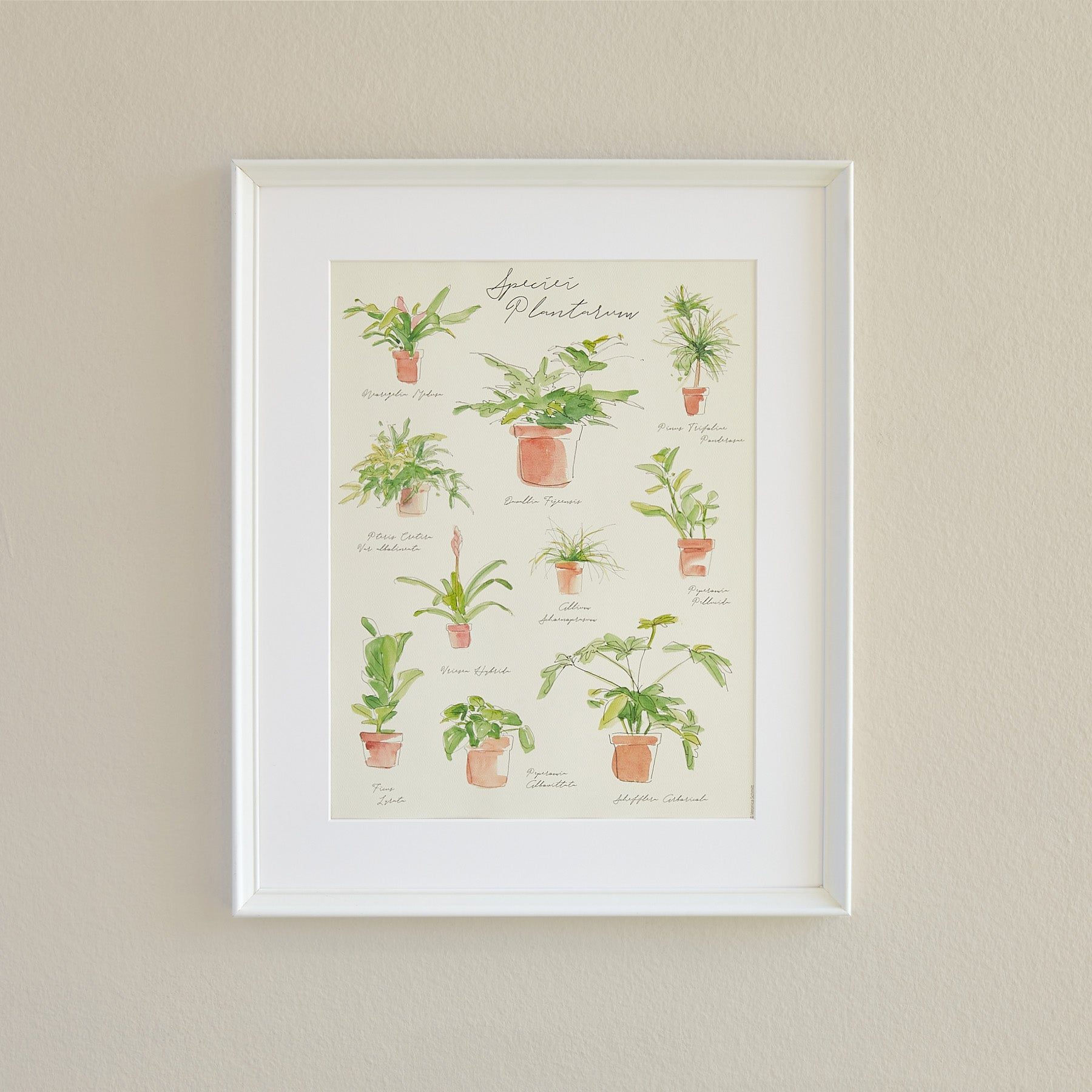 Plant Species Poster - House Plant Shop
