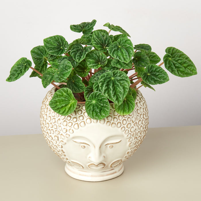 Queen Ophelia Planter - 6 Inch