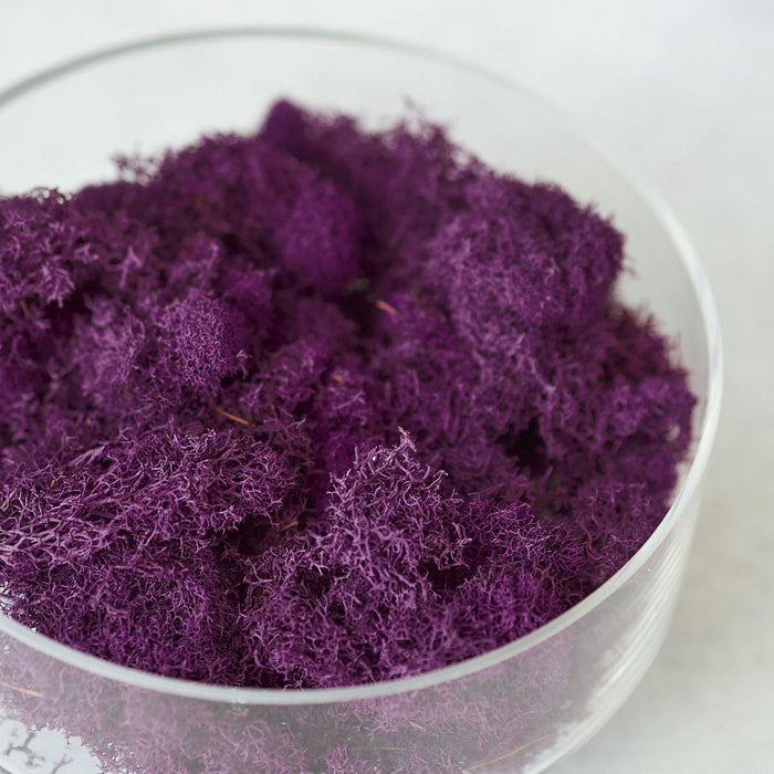 Preserved Reindeer Moss - Fuchsia - 6 oz - House Plant Shop