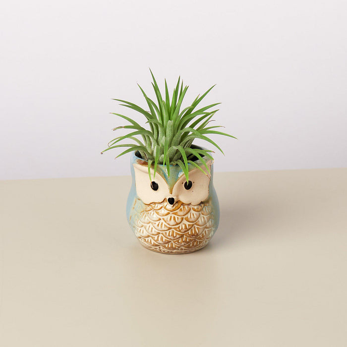 Small Owl Planter