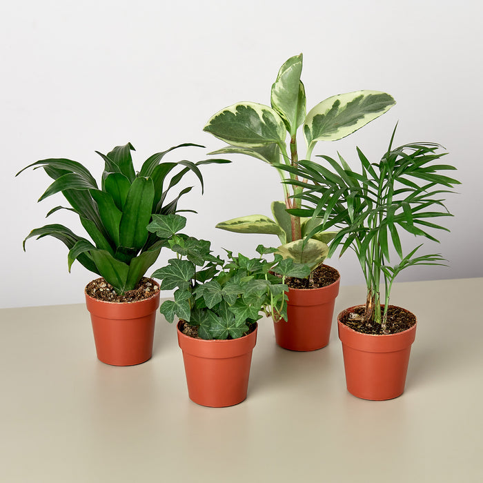 "2"" Tropical Plant Variety Bundle"