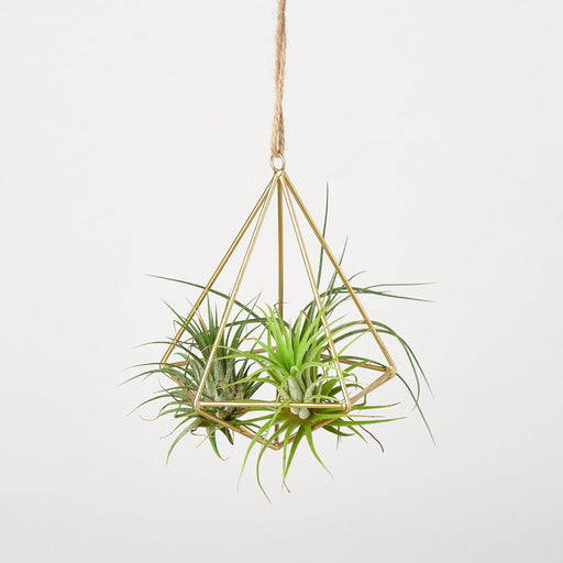 Air Plant Display Hanger - Brass - House Plant Shop