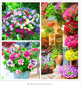 110 pcs/bag double petals petunia seeds bonsai flower seeds Short height garden flowers seeds indoor or outdoor plant pot.