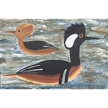 """Hooded Mergansers Ducks"""