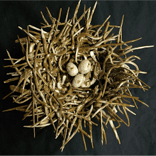 """Bird Nest with Eggs"""