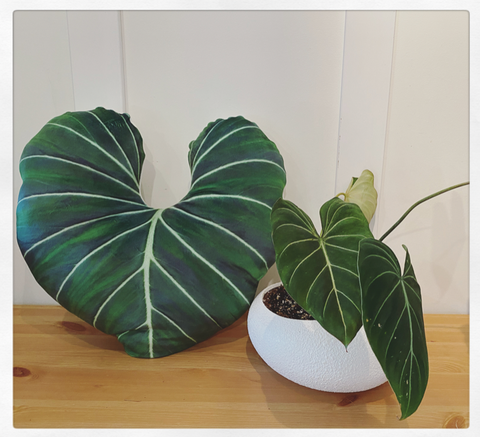 BeLEAF Cushion PREorder - Philodendron Gloriosum