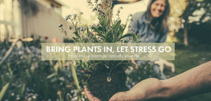 Bring plants in, let stress go