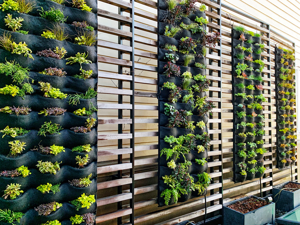Vertical Living wall panels mounted on trellises