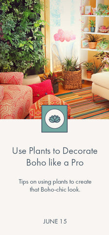 Boho-chic decorating with plants blog link