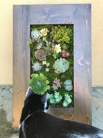 "Succulent planter kit 8.5"" x 18"" with wood frame"