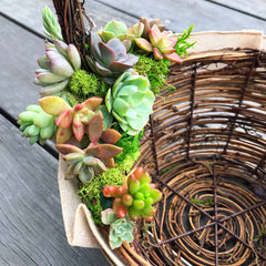 Succulent Basket Close Up