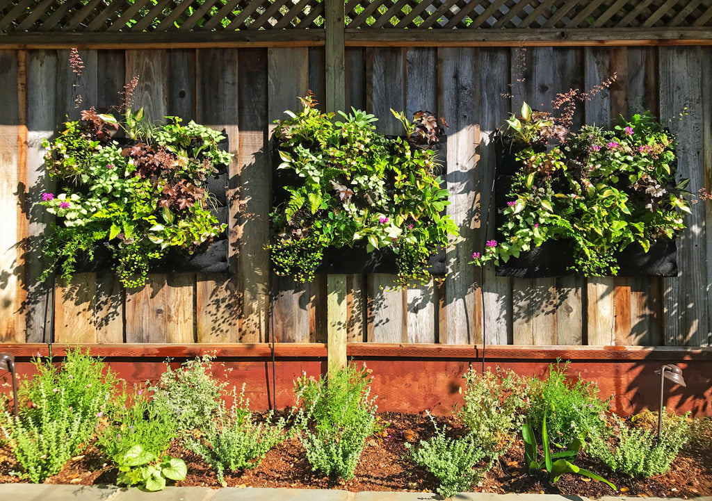 Summer Growth in Living Wall Triple Planter Display