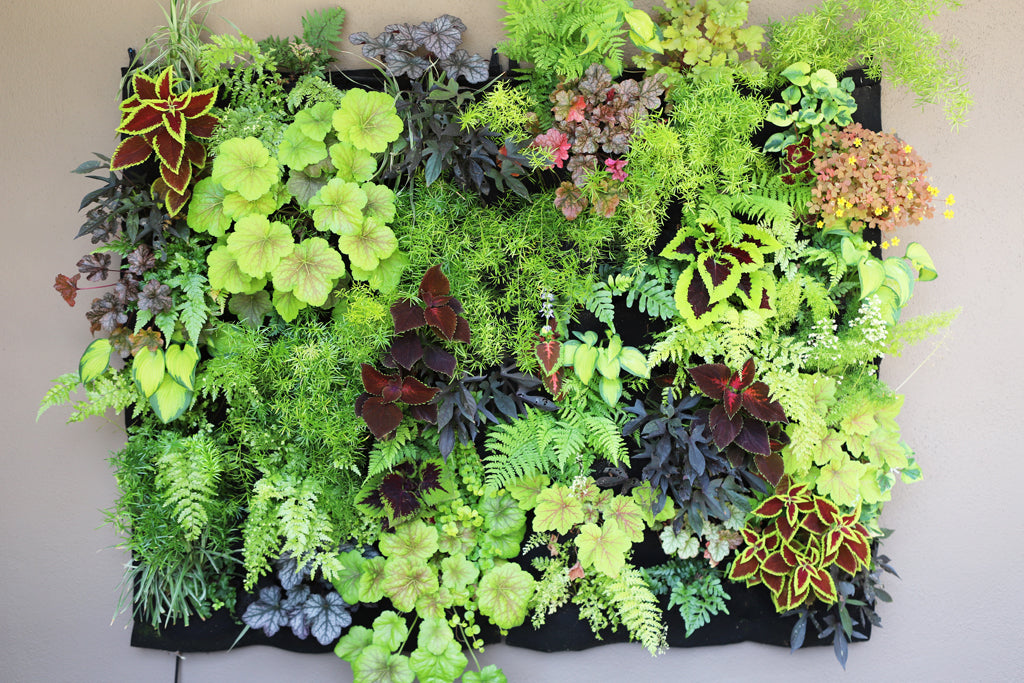 48 Pocket Living Wall Summer Refresh