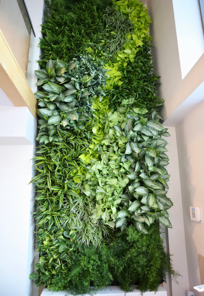 Vertical View of Slice Products' Green Living Wall