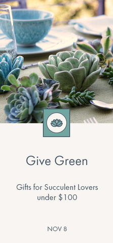 Give Green - Gifts for Succulent Lovers under $100