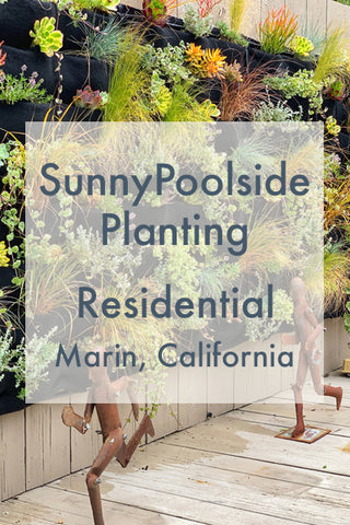 Sunny Poolside Planting