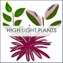High light plant infographic