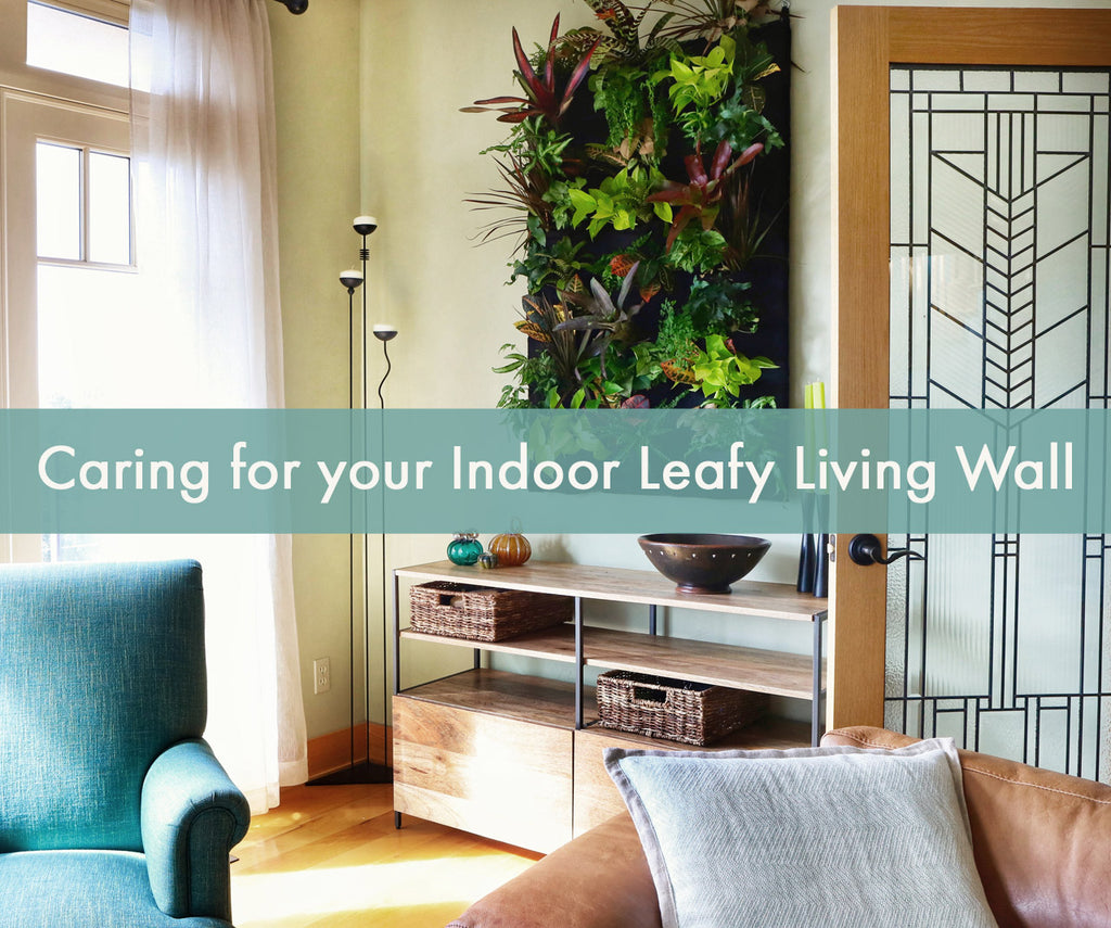 Caring for your indoor leafy living wall