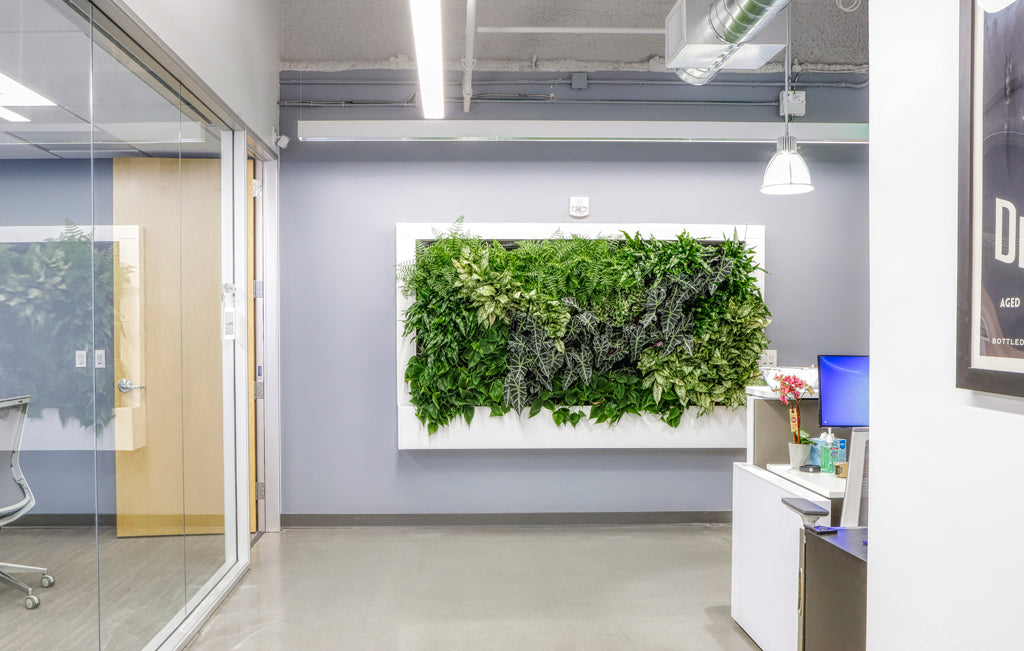 Indoor Office Living Wall & Conference Room View