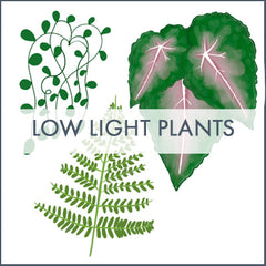 Low light plant infographic