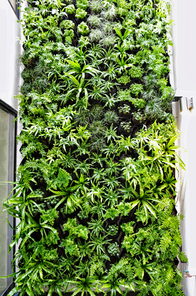27' Tall Residential Living Wall in Atrium of Home
