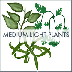 Medium light plant infographic