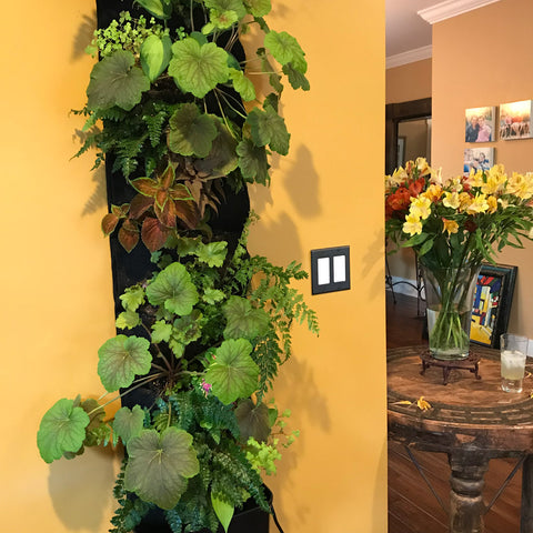 Indoor living wall plant sanctuary