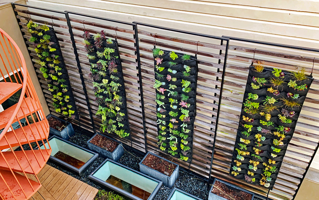 Planted living wall panels viewed from above