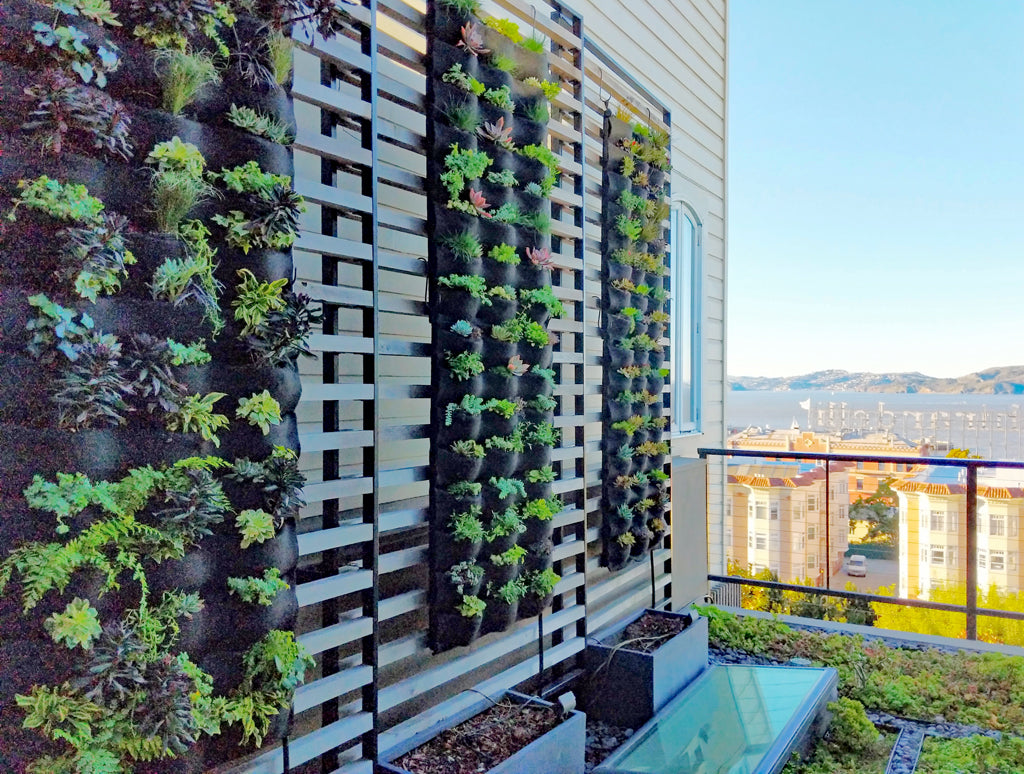 Rooftop living walls above ghirardelli square in SF