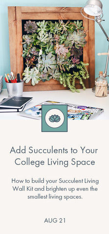 Add Succulents to College Life Blog Link