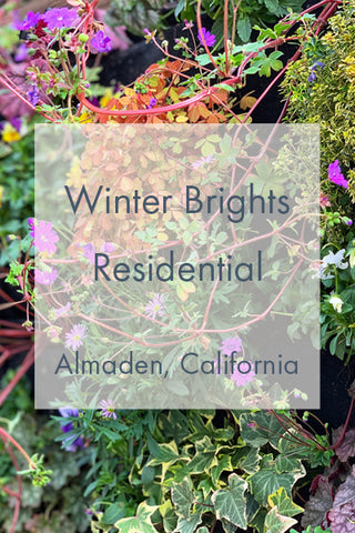 Colorful Winter Flowering Living Wall Link