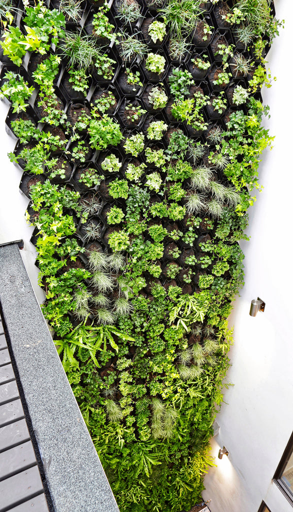 Top Down View of Internal Atrium Living Wall