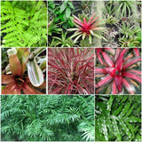 Tropical Plants - Leafy Living Wall Collection