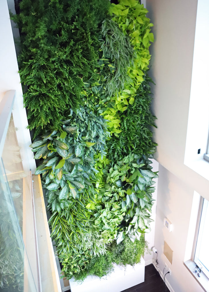Living Wall Viewed from Upstairs
