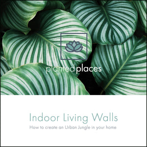 Indoor Living Walls eBook Cover