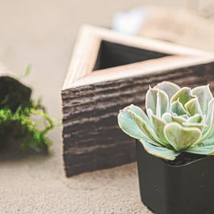 Succulent Wooden Triangle Box Planter Kit Close Up