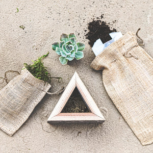 Mini Succulent Triangle Wood Box Kit