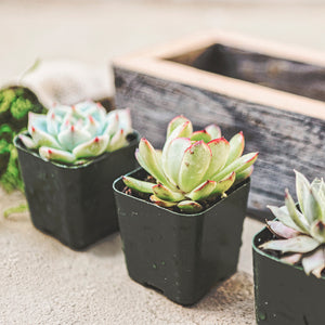 Reclaimed Wood Succulent Planter box kit - close up