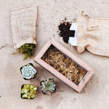 Small Succulent Wood Box Planter Kit