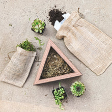 Medium Succulent Triangle Wood Box Planter Kit
