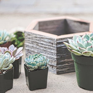 Succulent Hexagon Box Kit Up Close