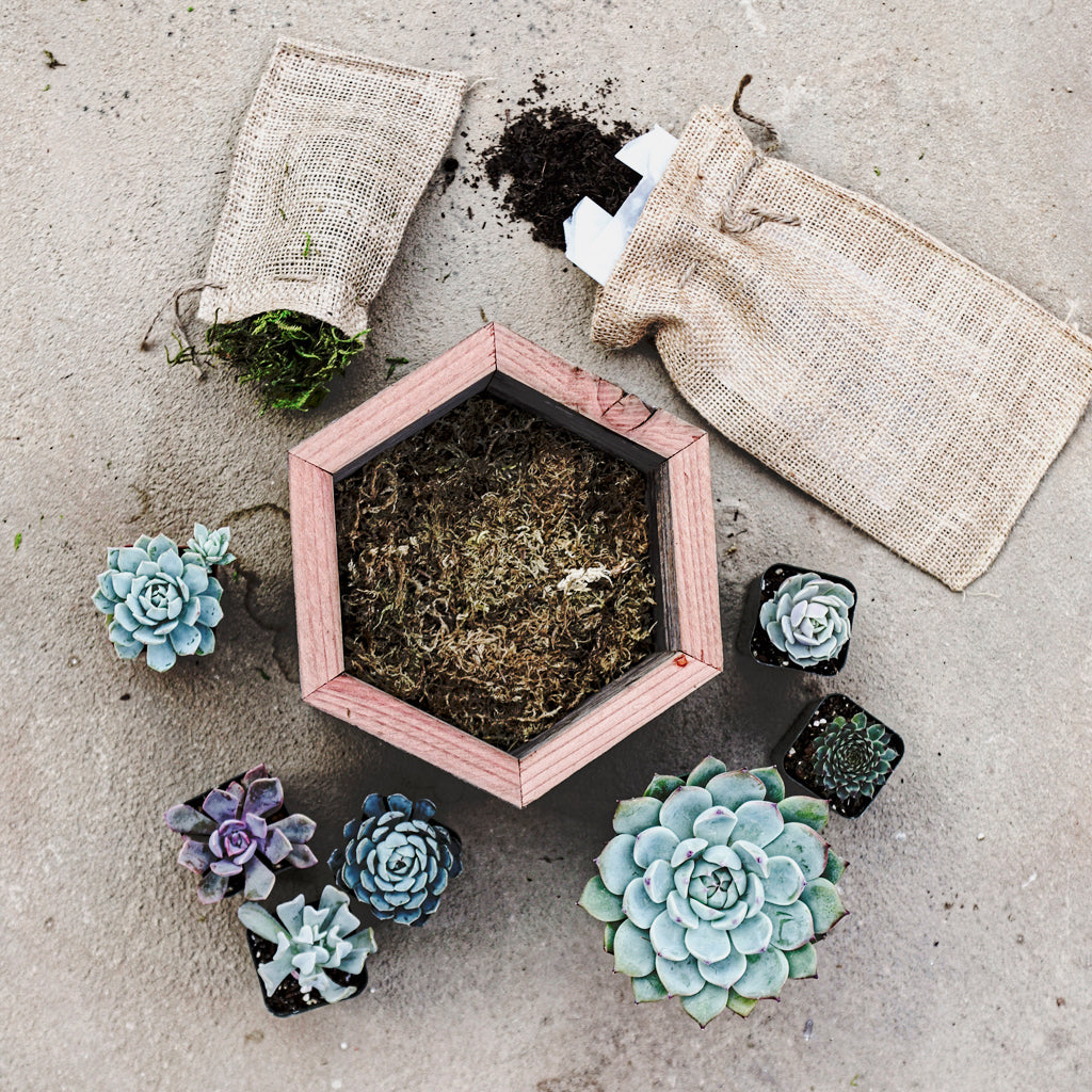 Medium Succulent Wood Hexagon Box Kit