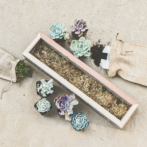Succulent Rectangular Wooden Box Planter Kit - Large