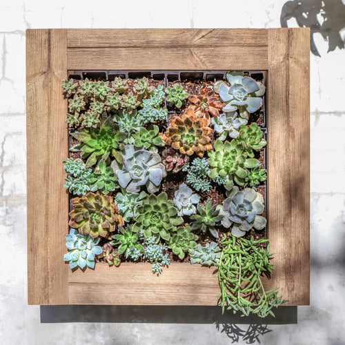 Framed Burnt Coral Succulent living wall