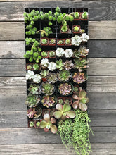"Basic Vertical Planter Kit that includes Brown and Silver Succulents and a 17"" x 36"" configurable Wall Planter"