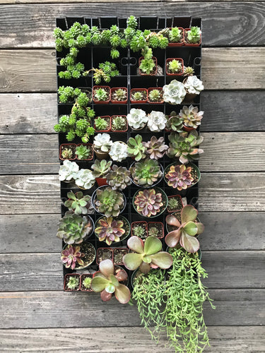 Basic Vertical Planter Kit that includes Brown and Silver Succulents and a 17