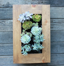 Framed Succulent Planter Kit Mounted on Wall - Confetti Diagonal Design