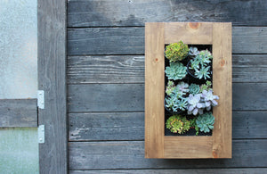Succulent Planter Kit hanging on wall