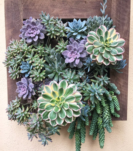 vertical garden living wall garden kit to hang on any surface in your backyard or in the home.