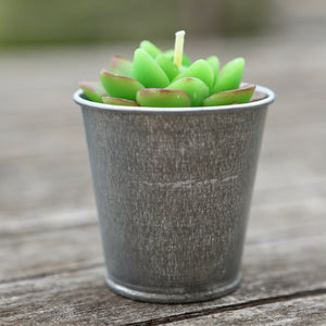 Potted Succulent Candle Variety 1